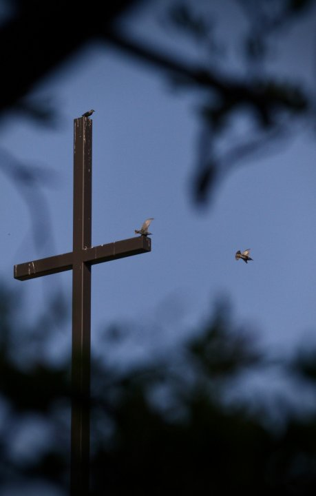 birdsoncross